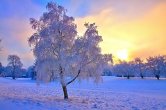 It's cold outside (Explored) (PeterYoung1) Tags: winter sunset snow wow1 wow2 wow3 wow4 wow5 explored
