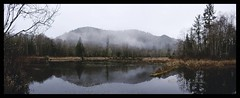 Rainy Mclane Trail (Blake_Yo) Tags: trees panorama tree nature outdoors washington hiking pano border lakes olympia wa lak oly