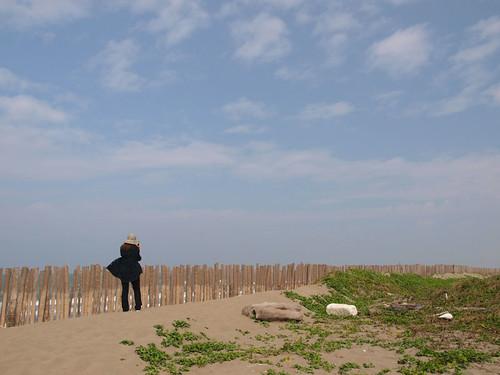 台江內海沙洲的海邊