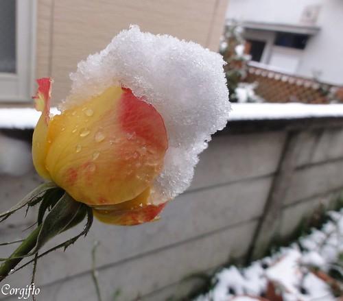 BLOG-101226-neige-05