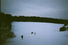 sledging... (jennygutteridge) Tags: horse snow hill surrey sledging coulsdon