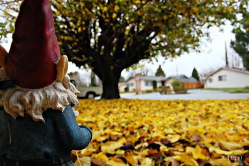 Gnome loves Fall