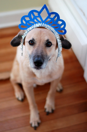 Happy new year from Daisy Dog.