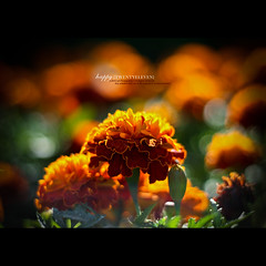 Happy twentyeleven. (Waseef Akhtar) Tags: summer orange sunlight plant flower color detail nature ecology floral beautiful beauty field yellow closeup garden season botanical golden petals spring flora colorful day natural bright blossom bokeh gardening head vibrant background seasonal group grow happiness newyear fresh foliage flowerbed growth single bloom annual pollen cheerful botany marigold cosmos blooming tagetes 2011 twentyeleven