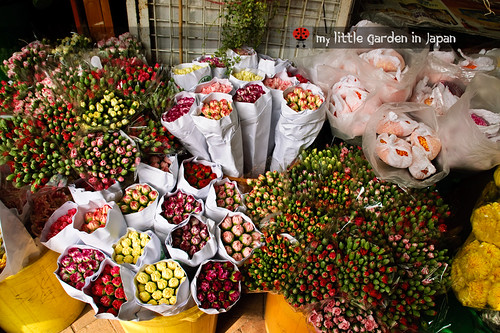 Hong-kong-flower-market-4