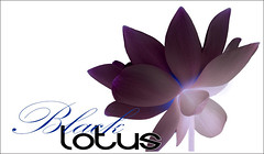 Black Lotus - BlackLotus-30-0700 (Bahman Farzad) Tags: flowers black flower macro yoga poster design peace lotus relaxing peaceful meditation therapy lotusflower lotuspetal blacklotus lotuspetals lotusflowerpetals lotusflowerpetal
