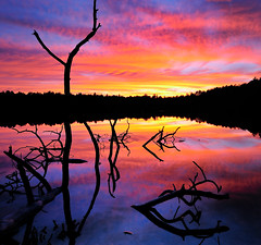 Norway Lake Sunset, Michigan's Ottawa National Forest (Michigan Nut) Tags: blue sunset red orange usa lake reflection tree silhouette clouds landscape geotagged photography michigan branches explore deadtree recent frontpageexplore ottawanationalforest