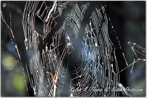 Web at Lysterfield Park