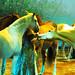 sterrennieuws apassionata2011inhetlichtvandesterrenlottoarenaantwerpen