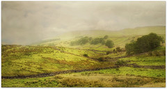 A Summer's Day (~ paddypix ~) Tags: trees summer england green rural countryside yorkshire fields walls bog langstrothdale