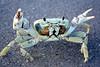 Mr. Krabs! (Harlea Takes Photos) Tags: ocean winter sea summer sun cold beach water canon sand warm waves florida crab sealife atlantic palmtree nautical canonrebelxs canonxs canonxsrebel