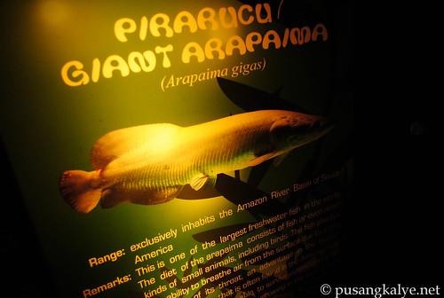 pusangkalye-1-960