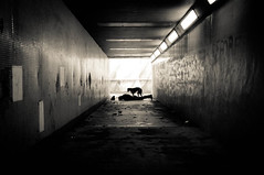 Face-down.... underground.... sort of (It's life Jim....) Tags: bw dog selfportrait dark photography blackwhite jim tunnel explore bitch getty shana 365 ridgeback rhodesianridgeback facedown project365 365days fdt 3652011