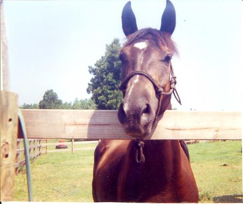 horsey buddy