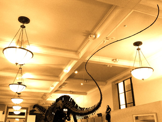 American Museum of Natural History - Fourth Floor - Dinosaur Fossils