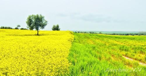 Verde y amarillo.