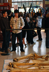 Quetzalcoatlus 1.14.11 (Houston Museum of Natural Science) Tags: museum houston science exhibition sciencemuseum pterosaur hmns quetzalcoatlus houstonsciencemuseum assemblingapterosaur
