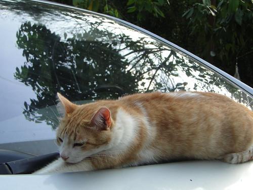"""O carro é o meu """"puxadinho""""!"""