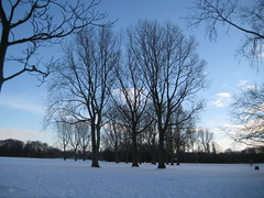 Winter in Holland (Pat_2010) Tags: winter snow holland tree ice nederland kou ijs vriezen