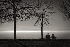 piccoli. (Riccardo V.) Tags: trees white lake black 20d water alberi canon lago 50mm couple albero acqua bianco nero coppia lagotrasimeno
