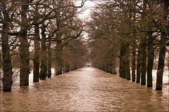 Flooded lane (Foto Martien) Tags: winter holland water netherlands dutch flood nederland lane rhine dieren ijssel veluwe uiterwaarden gelderland roundtower brummen floodplain laantje oprijlaan riverijssel weggetje geldersetoren spankeren rijndelta a550 rondetoren rhinedelta martienuiterweerd carlzeisssony1680 martienarnhem gelderseijssel sonyalpha550 mygearandme mygearandmepremium martienholland mygearandmebronze mygearandmesilver mygearandmegold geldersetower mygearandmeplatinum fotomartien overtstroming