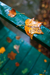 On the bridge (Raoul Pop) Tags: bridge autumn orange green fall wet leaves rain canon flickr seasons unitedstates maryland fallfoliage northbethesda canoneos5d googlephotos