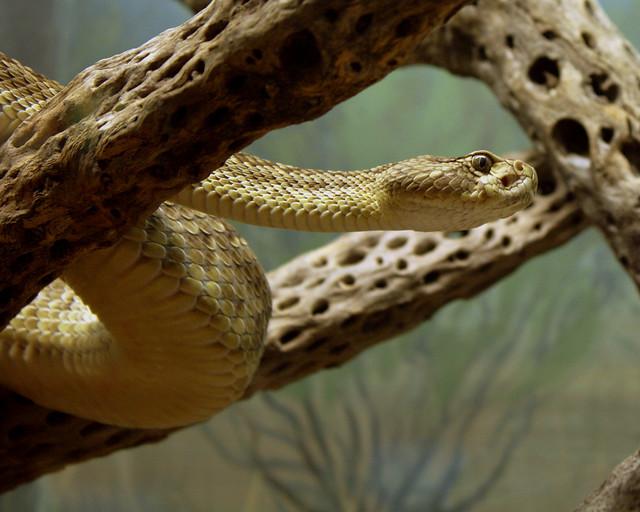 SSSSave the ssssserpent?