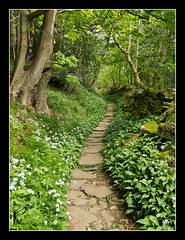 The Nun's Steps (Sylvia Slavin ARPS (woodelf)) Tags: trees wild woods path steps nuns panasonic garlic priory swaledale lx5 marrick