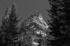 Ragged Peak through the Trees (au_ears) Tags: raggedpeak 2016 yosemite tuolumnemeadows california