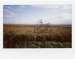Landscape. 2016. (freedomflash) Tags: fuji instax wide fujifilm instant film analog