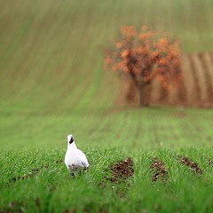 Countryside Project #15 (Fabrizio Olivi) Tags: italy canon project eos countryside fabrizio marche 2010 olivi 500d theauthorsplaza authorsclub