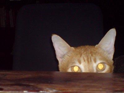 laser eyes on!