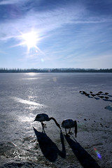 0461 (Bethie Inthesky) Tags: sun snow ice swan frozenlake