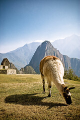 Inhabitant of Machu Picchu