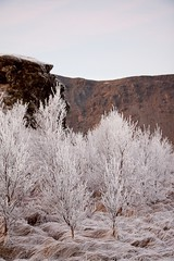 frosen (Fjola Dogg) Tags: winter sky naturaleza snow macro landscape iceland islandia frost naturez