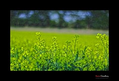 602103122010-Flickr (HamimCHOWDHURY  [Active 01 Feb 2016 ]) Tags: life blue light shadow red portrait blackandwhite sun white black flower green nature canon eos twilight colorful faces blu sony surreal excellent dhaka vaio rgb bangladesh gettyimages dlsr floweryellow 60d incrediblebengal hamimchowdhury 595036 framebangladesh 505036 gettyimagesbangladeshq2