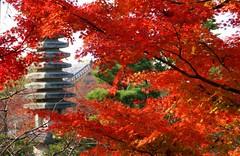(nobuflickr) Tags: autumn nature japan kyoto autumncolors   kiyomizuderatemple