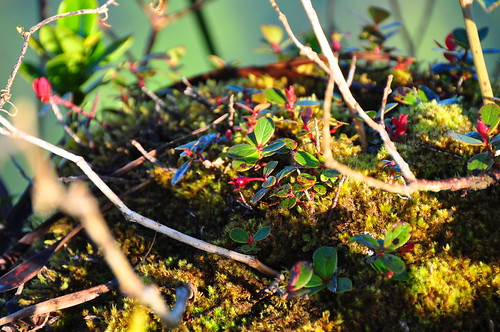 Moss Habitat | Flickr - Photo Sharing!