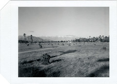 Palm Desert, CA (moominsean) Tags: california palms dead polaroid desert cut lot vista spare stumps graflex palmdesert crowngraphic type53 expired032009