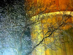 naked tree in the dark (Harlory) Tags: light tree night licht nikon colours nacht lumière romania coolpix soir albero ramo farbe colori arbre baum notte couleur luce branche artcolor p100 zweig slatina flickraward mygearandmepremium mygearandmebronze mygearandmesilver mygearandmegold mygearandmeplatinum