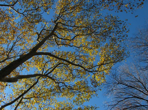 Central Park Trees in the Ramble