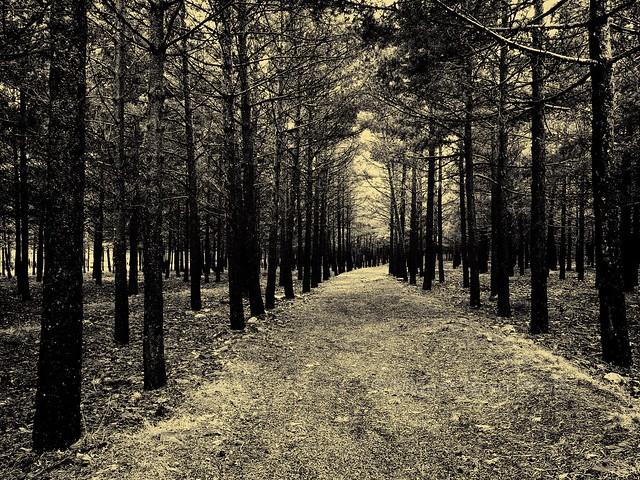 Vastedad de pinos