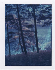Dappled (Rhiannon Adam) Tags: trees ireland winter forest landscape polaroid 669film glacialvalley peelapart gleanndloch