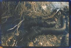 Drain pipes (efo) Tags: bw cyanotype gumbichromate digitalnegative altprocess drainpipes yashicalynx14e efo:site=1