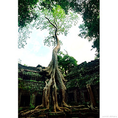 """He who controls the past, controls the future. He who controls the present, controls the past."" (Yannick Delmaire) Tags: tree temple cambodge cambodia roots angkor arbre taphrom yannick racines kapok silkcotton olympusom2n fromager delmaire yannickdelmaire"