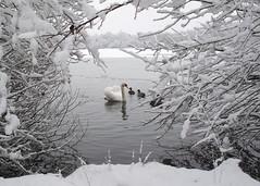 Winter 2010 #1 (Paul J Chapman Photography) Tags: winter scene