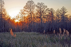 Field of fire (juliealicea1947) Tags: sunset field fire louisiana swamp sorrento fieldoffire louisianasunset