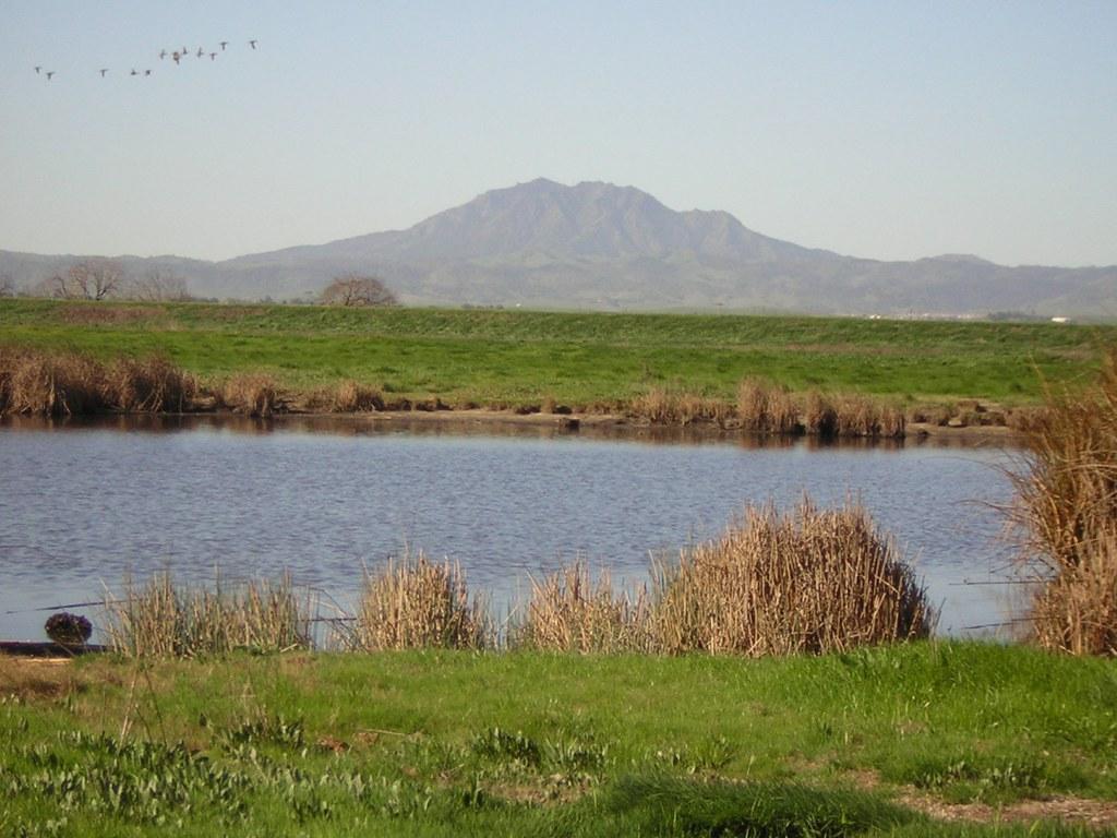 Emerson Parcel Tidal Marsh California