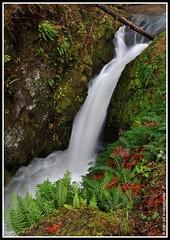 Chichester Falls (JSB PHOTOGRAPHS) Tags: autumn water leaves oregon creek leaf moss stream falls waterfalls ferns chichester fallcreeklake