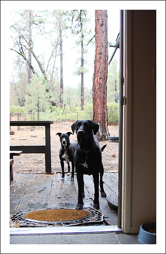 1dogs1220_3908